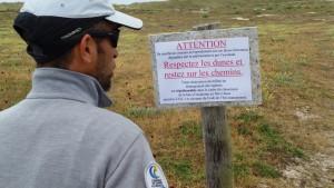 Protection du guêpier (1)